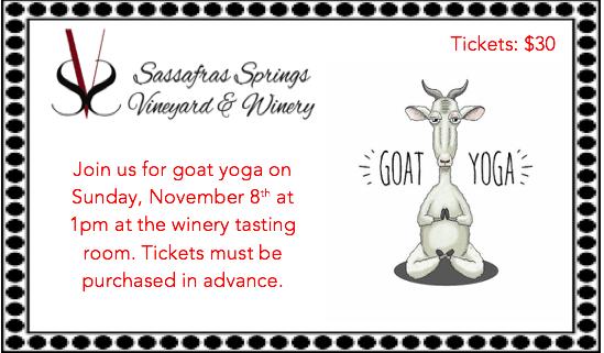 Goat Yoga at Sassafras Winery